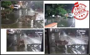 Video Of Pride Of Lions In Gujarat Shared As Tigers Spotted In Mumbai